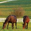 HorseMax Paddock 10kg Grass Seed Mix 2