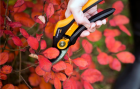 Pruners and Loppers