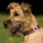 Pioneros Polo Dog Collar - Berry, Navy & Pink 2