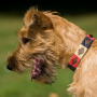 Pioneros Polo Dog Collar - Navy, Cream & Red 2