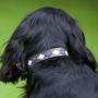 Pioneros Polo Dog Collar - Pampas Cross Navy & Blue 2