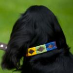 Pioneros Polo Dog Collar - Rainbow 2