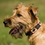 Pioneros Polo Dog Collar - Red Stripe 2
