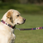 Pioneros Polo Dog Lead - Berry, Navy & Pink 2
