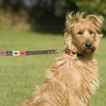 Pioneros Polo Dog Lead - Navy, Cream & Red 2