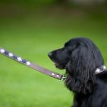 Pioneros Polo Dog Lead - Pampas Corss Navy & Blue 2
