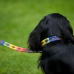 Pioneros Polo Dog Lead - Rainbow 2