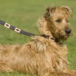 Pioneros Polo Dog Lead - Red Stripe 2